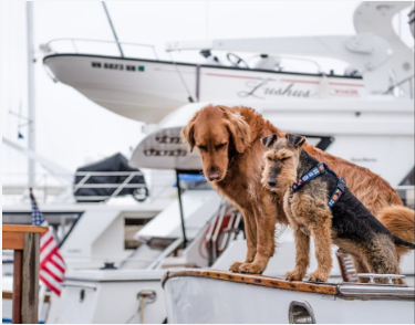 Photo of two dogs sitting along side a boat yard.